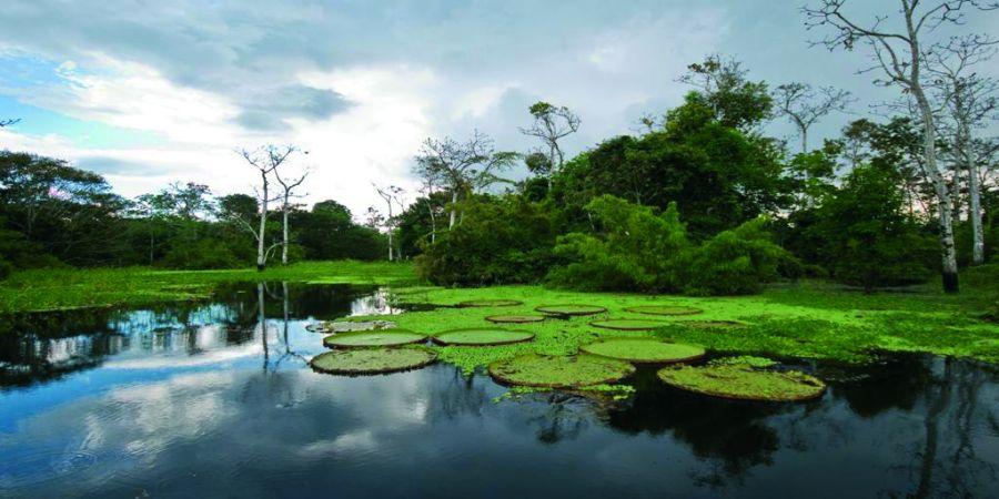 der amazonas wird zu einem der 7 naturwunder der erde. Black Bedroom Furniture Sets. Home Design Ideas