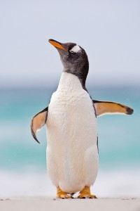 ©Heike_Odermatt_Falklandinseln