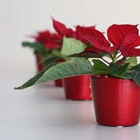 Schöne Weihnachten! | Boas Festas! | Feliz Navidad!