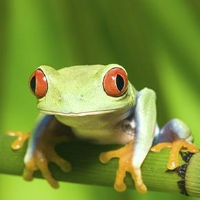 Klimafreundliches Costa Rica