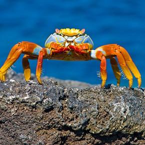Galapagos-Rundreise mit deutscher Reiseleitung