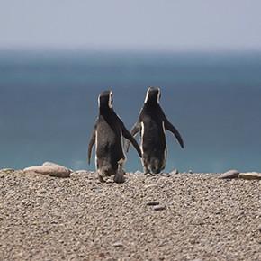 Öffnungszeiten Pinguinkolonie Otway