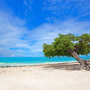 Ausgezeichnet: Strände & Hotels auf Aruba