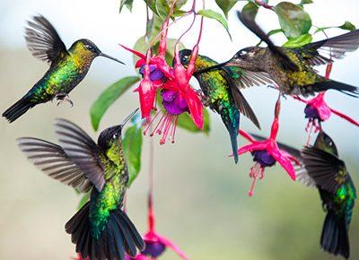 vogelbeobachtung costa rica