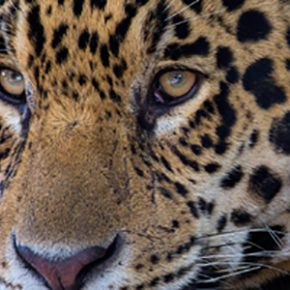 Pantanal Expeditions-Tour