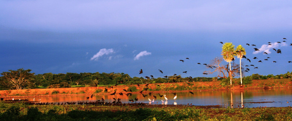 Reise ins Pantanal nach Brasilien