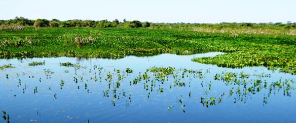 Die Landschaft des Pantanals ist so außergewöhnlich wie abwechslungsreich