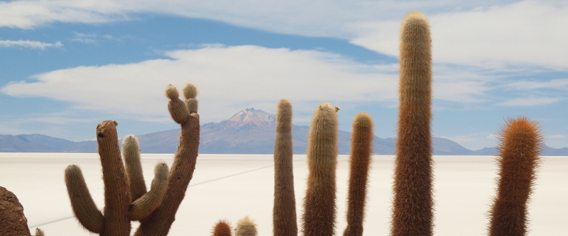 Die Isla Incahuasi in der Uyuni-Salzwüste