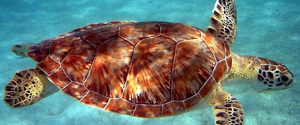 Wunderbare Unterwasserwelt auf Dominica