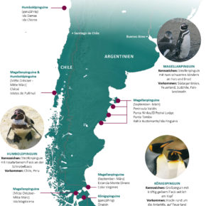 Pinguine in Chile & Argentinien (Infografik)