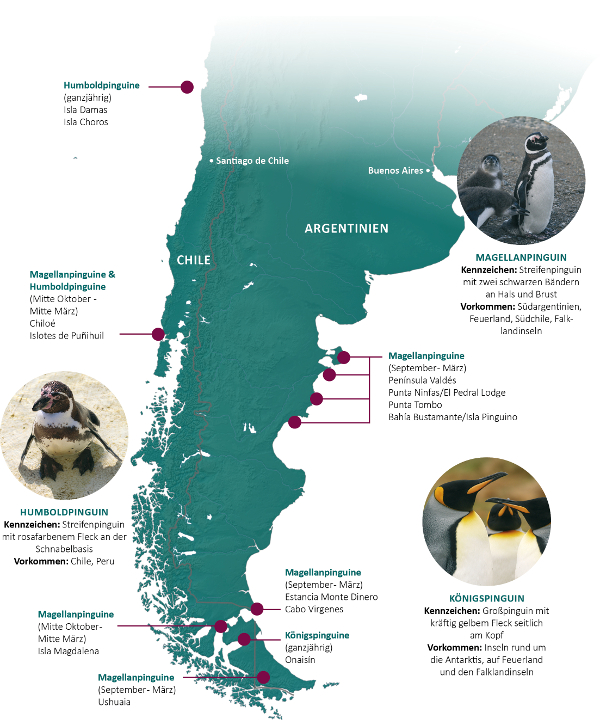 Pinguine in Chile und Argentinien
