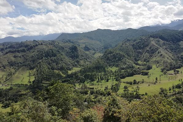 Blick auf die Kaffeeplantagen von Salento