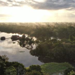 Brasiliens Regenwald retten